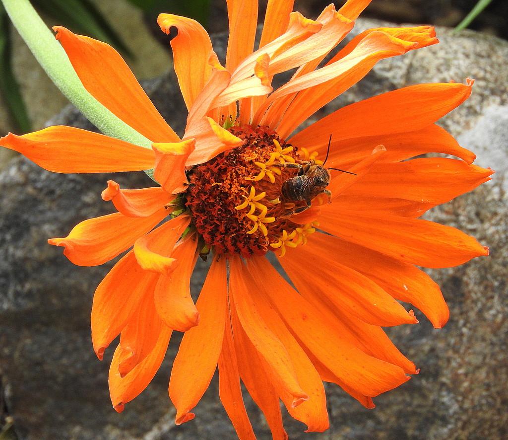 Bee-utiful by homeschoolmom