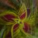 zoom burst with a twist by jackies365