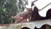 2016-08-24 - Roof kitty