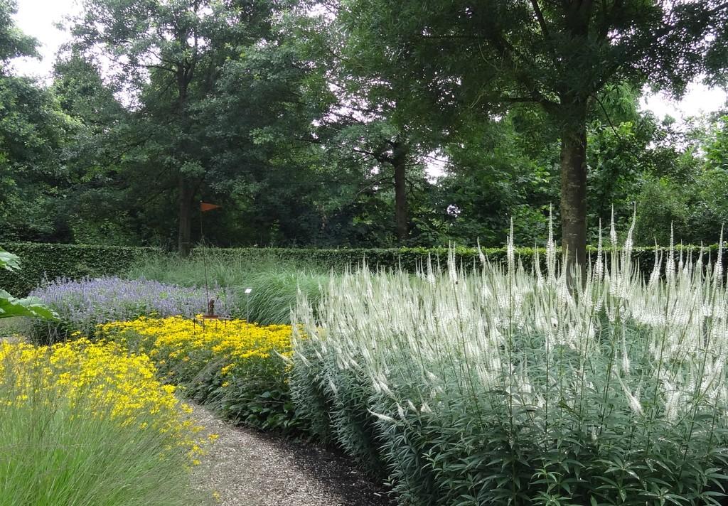 garden again by gijsje