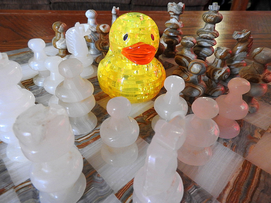 Ducky finds chess a little overwhelming! by homeschoolmom