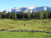 25th Aug 2016 - High mountain pasture