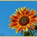 Let The Sunshine In by carolmw