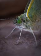 27th Aug 2016 - Green eyed monster