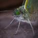 Green eyed monster by ilovelenses