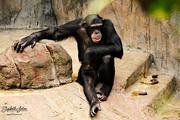 1st Aug 2016 - Big monkey