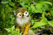 2nd Aug 2016 - Little monkey