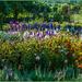 A Myriad Of Flowers