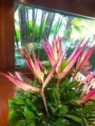 27th Aug 2016 - Flower arrangement