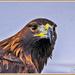 Eagle-Eyed by carolmw