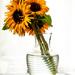 Sun Flowers by joansmor
