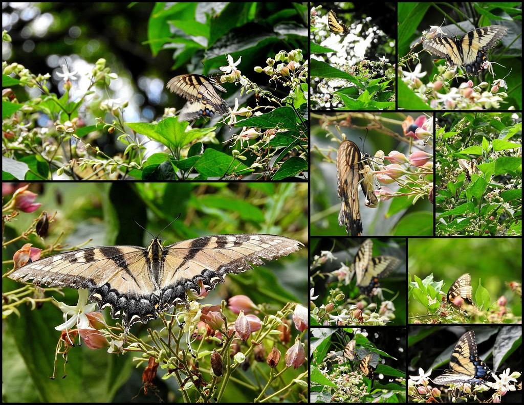 Butterflies on a tree by homeschoolmom