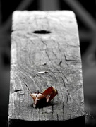 1st Sep 2016 - Fallen leaf and photobomber