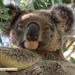 2 new kids 1 week by koalagardens