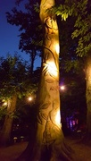 1st Sep 2016 - World Record Tree Sculpture