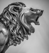 1st Sep 2016 - Roar