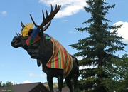 1st Sep 2016 - Is That A Moose?