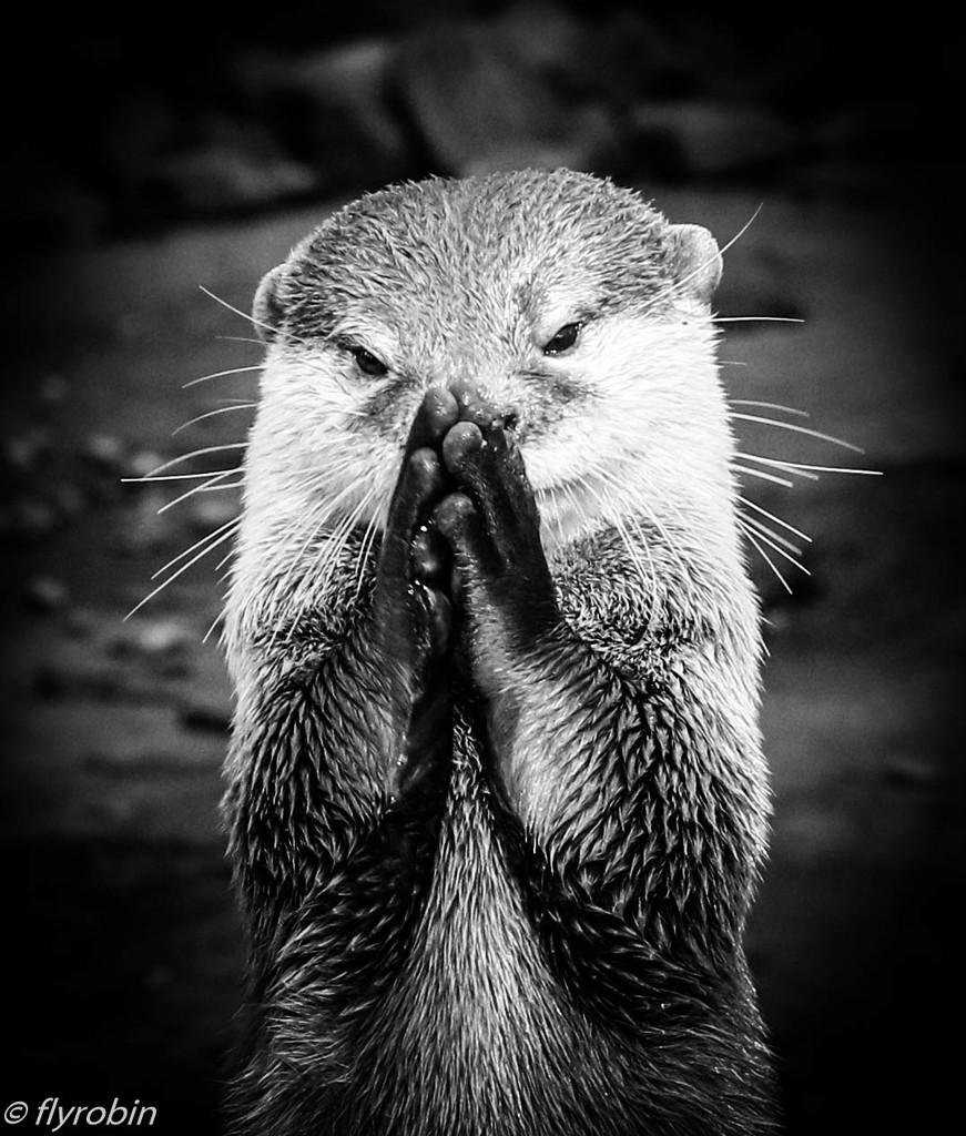 Just saying my prayers by flyrobin
