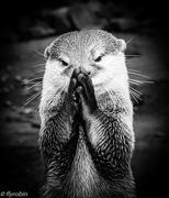 2nd Sep 2016 - Just saying my prayers