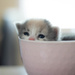 Kitty Cuteness on 365 Project