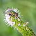 Fly by gardencat