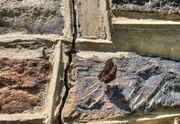 2nd Sep 2016 - Butterfly on the wall
