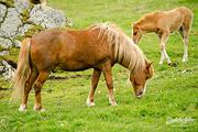 19th Aug 2016 - Horses