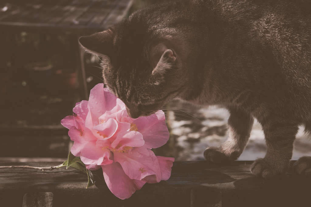 Take time to smell the roses  by brigette