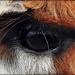 Eye Aye by yorkshirekiwi