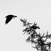 Tree top take off by berelaxed