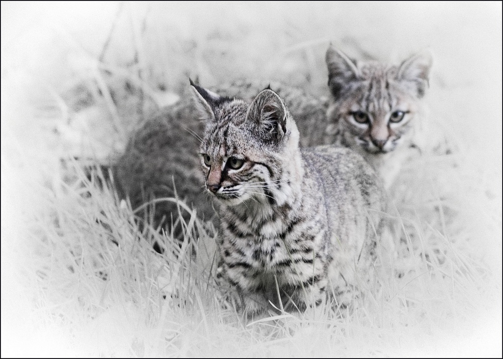 Bobsey Twins by aikiuser