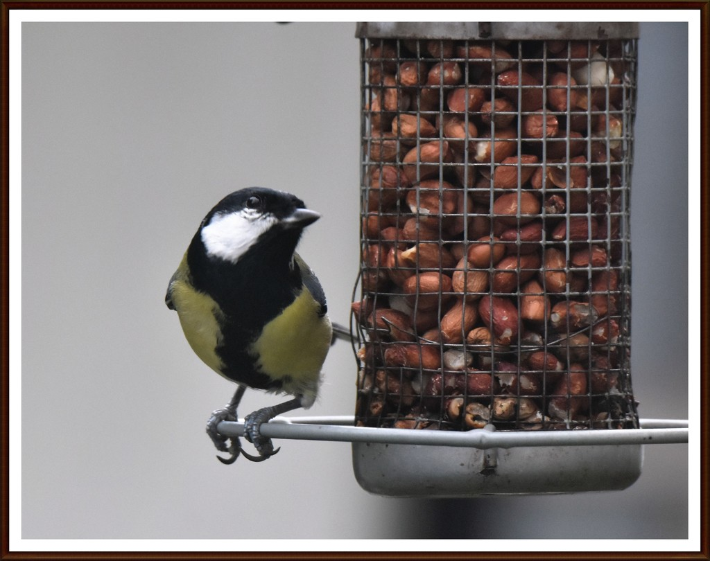 Great tit by rosiekind