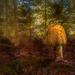 Mushroom King by taffy