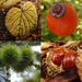 Autumn collage by helenhall