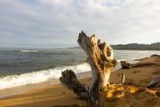 30th Jun 2016 - Sunset Driftwood