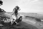 29th Jun 2016 - Driftwood