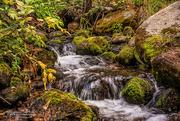 6th Sep 2016 - Willow Creek