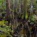 Deep in Four Holes Swamp, Dorchester County, South Carolina by congaree