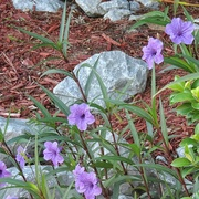 6th Sep 2016 - Flowers and Rocks