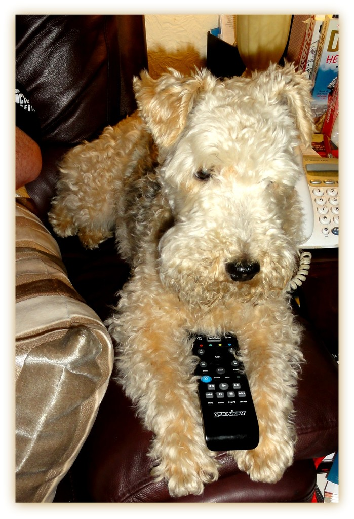 In charge of the remote  control  by beryl