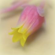 6th Sep 2016 - Macro Flower Bud