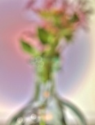 8th Sep 2016 - flowers in a vase