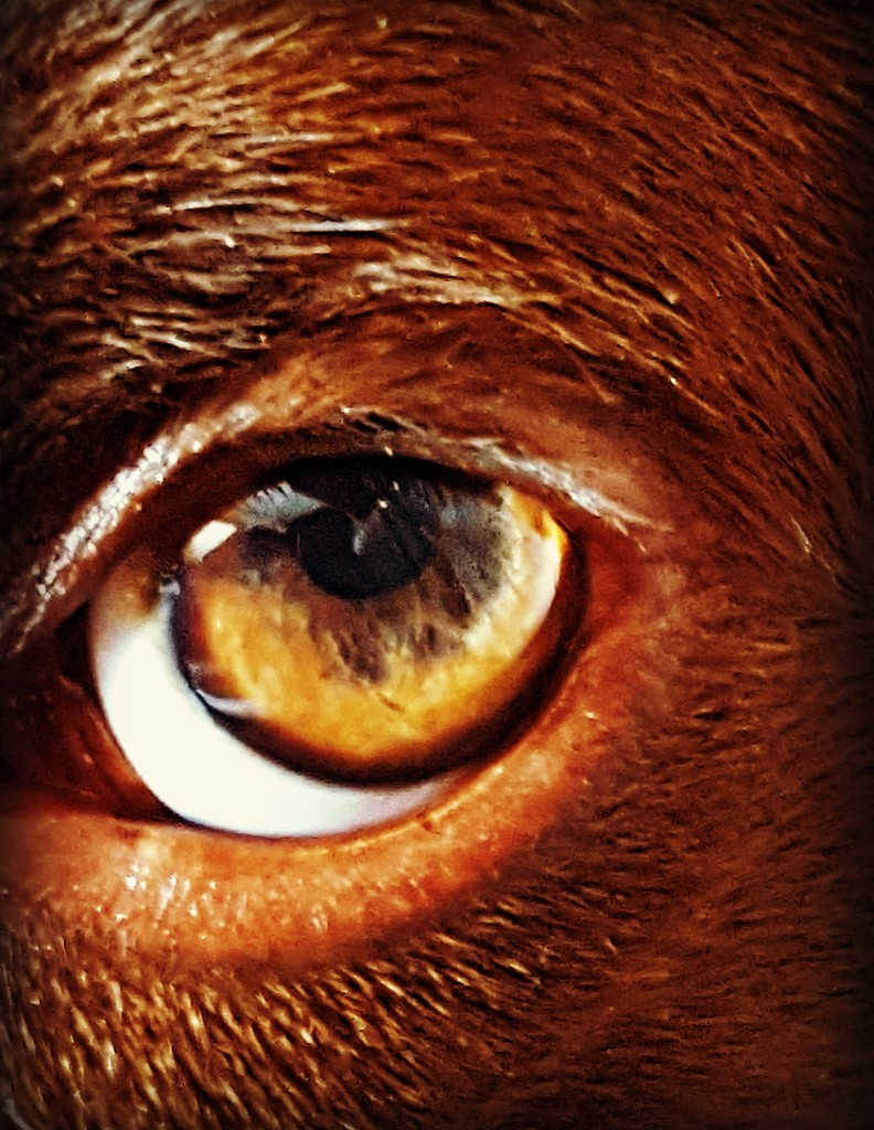 I'm Keeeping My Eye On You  by jo38