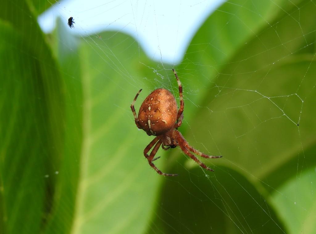 Garden spider by roachling