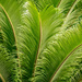 Feathery Leaves by jeetee