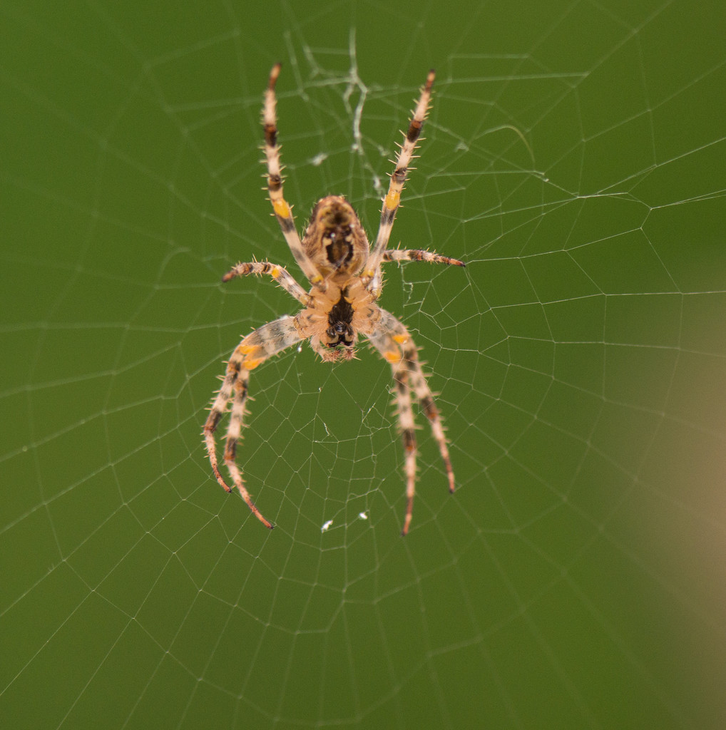 Along came a spider... by dridsdale