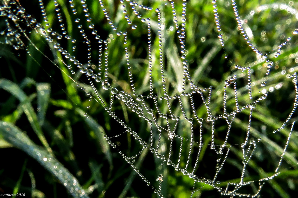 A Humid Morning - A Happy Web by milaniet