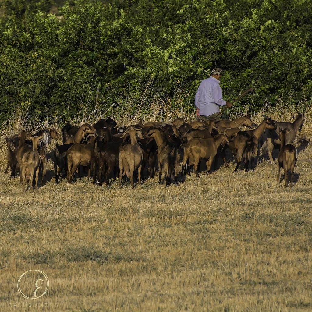 The Shepherd by evalieutionspics
