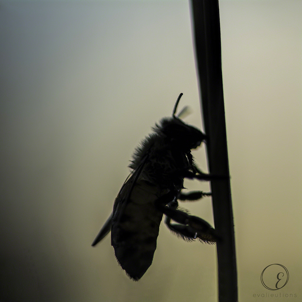 Bee silhouette by evalieutionspics