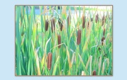 9th Sep 2016 - Time of the cattails